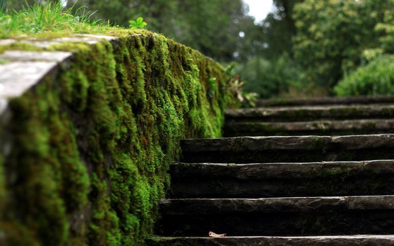 12 ступеней трезвой жизни