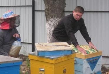 Занимаемся пчеловодством